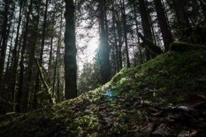Hiking Trails Juneau Alaska - Eagle Glacier Trail - Unplugged Alaska Adventures