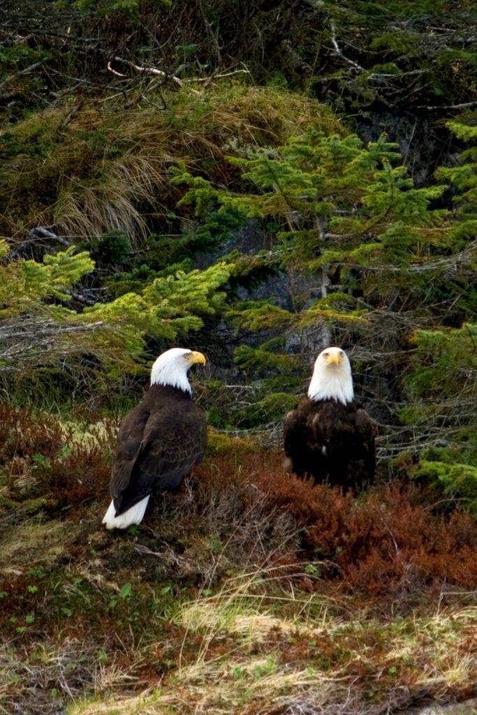 Hiking Trails Juneau-Eagles- Rain Forest Trail